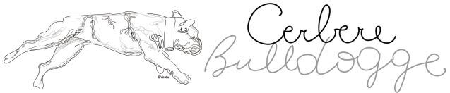 Cebere Bulldogge Frankrijk